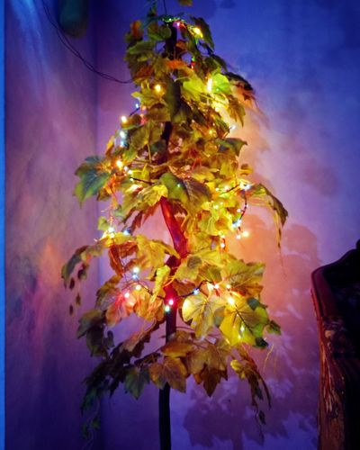 Low Angle View No People Tree Night Illuminated Celebration Beauty In Nature Nature Outdoors Growth Multi Colored Close-up