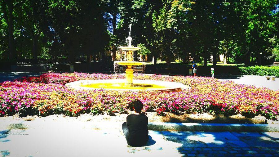 Flores de colores para algien qué solo conoce el negro en su vida . Tree Flowerbed Flower Outdoors Nature Day People Men Child