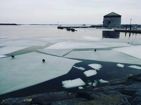These ice floats! . . . . Kingston_ontario Winter Icefloats Ducks Nature Icemelt