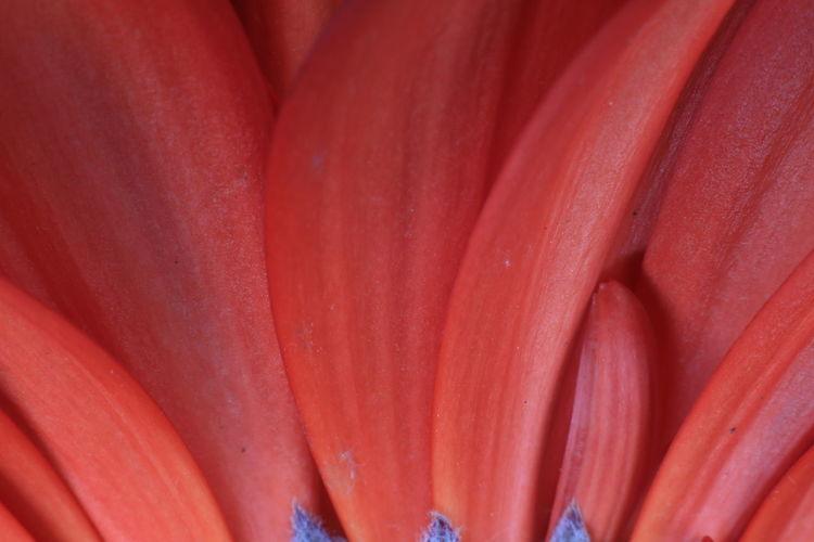 Full frame shot of red flower head