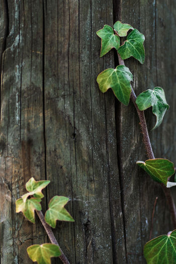 High angle view of plant growing on wooden plank