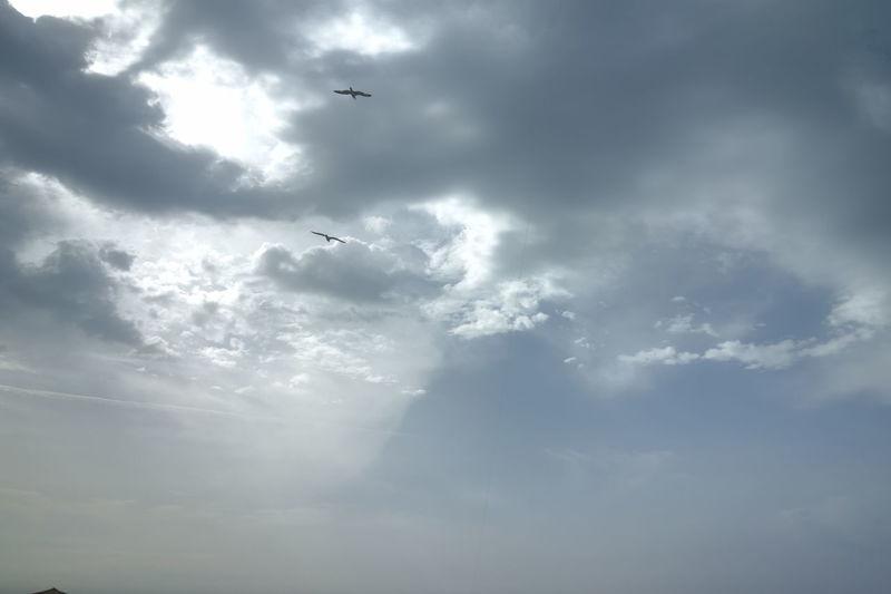 Sky Birds In Flight Birds In The Sky Sunlight Sunlight And Clouds