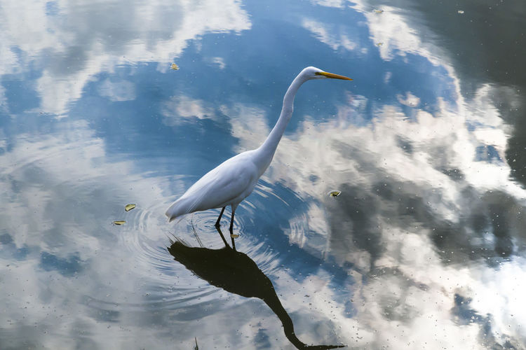 Animal Avian Beauty In Nature Blue Cloud Cloud - Sky Cloudy Day Nature No People Outdoors Reflection Rippled Sky Spread Wings Tranquility Water