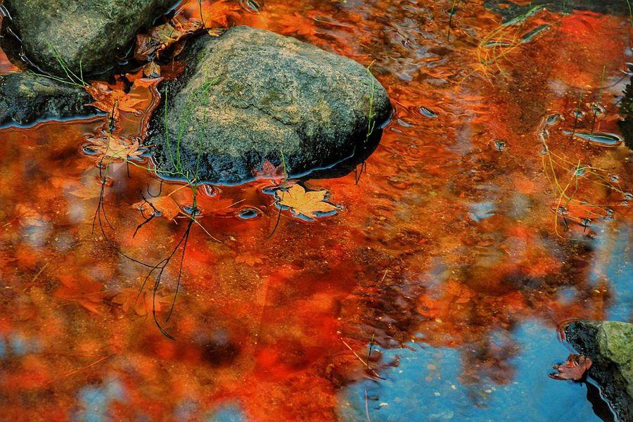 燃える水面。 Nature Autumn あなたと見隊 想い出 昭和記念公園 Japan