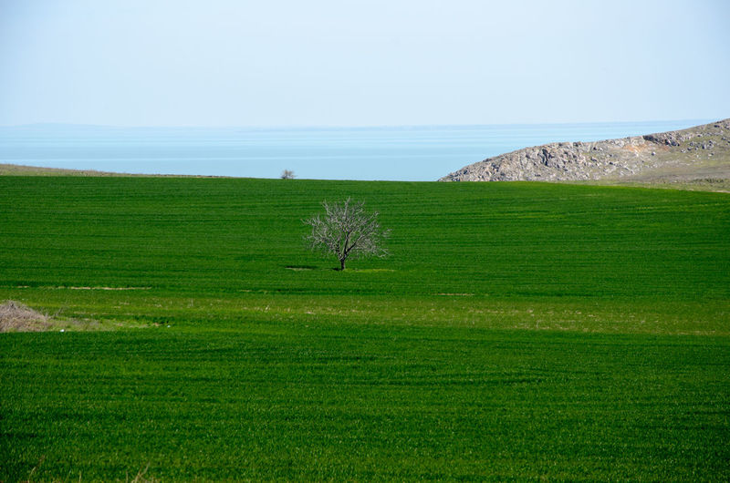 Alone Distant Grass Grass Green Green Color Landscape Lonely Nature Outdoors Tree