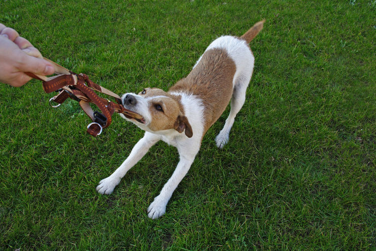 Stubborn dog Animal Animal Photography Animal Shelter Dog Dog Leash Dog Training Domestic Animals Keeping Of Pets Pet Stubborn