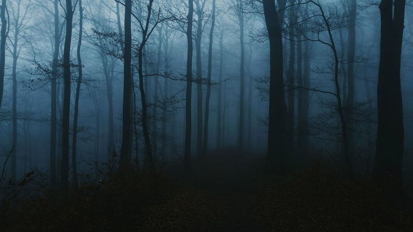 Haze Trees Forest Dusty Germany Into The Woods Haunted Blairwitch