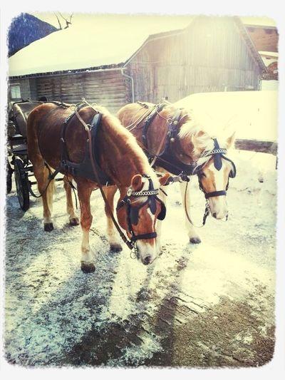 Kutschfahrt Im Schnee