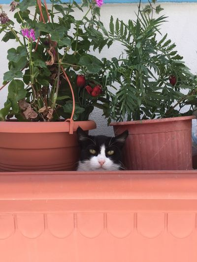 Cat in a Flower pot. Greece Nofilter Catoftheday Funny