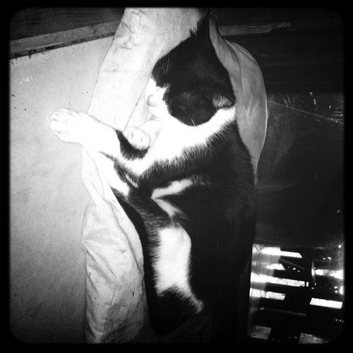 Panda, jadeseahorse's cat.