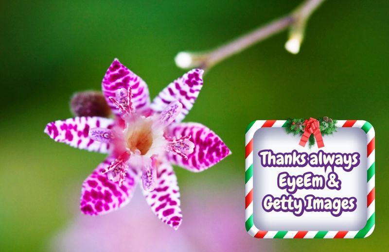 Thanks always &