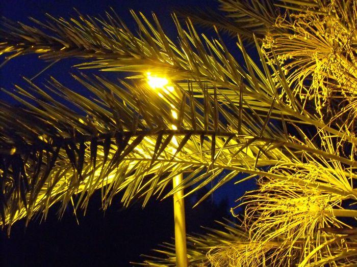 Low angle view of illuminated tree
