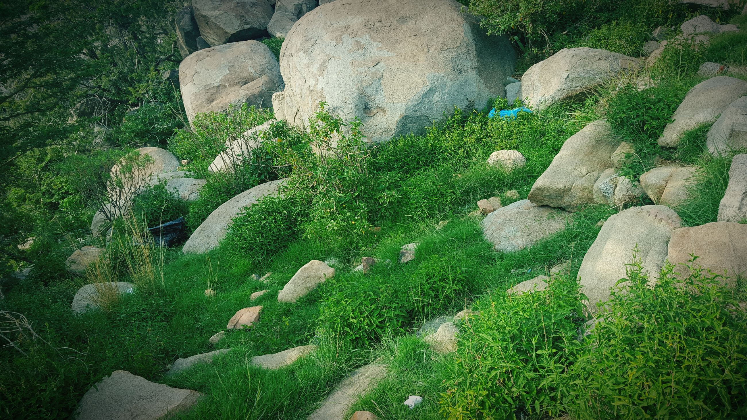growth, green color, high angle view, plant, nature, beauty in nature, grass, rock - object, tranquility, field, sunlight, moss, day, outdoors, no people, green, tranquil scene, rock, growing, scenics