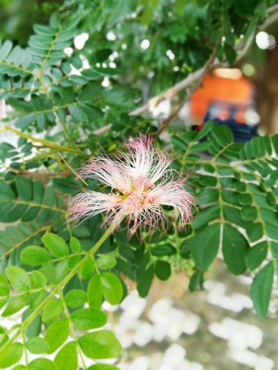 Flower Leaf Nature Plant Green Color Outdoors Fragility Day Beauty In Nature Close-up No People Flower Head Growth Freshness