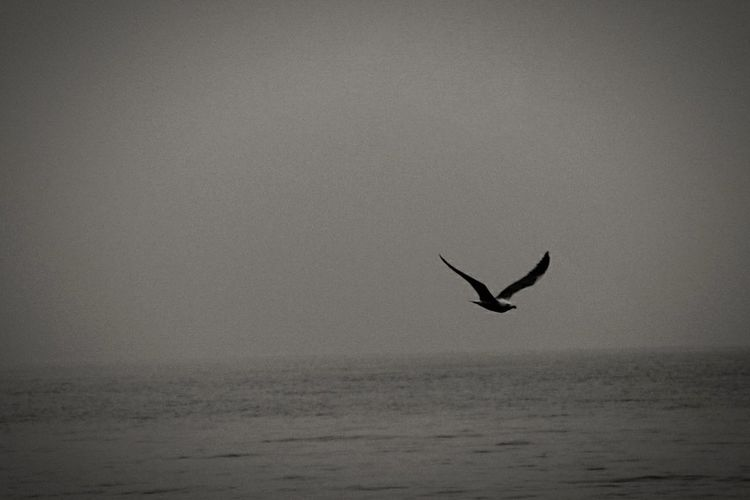 GreyDay Bird Freedom Skyandlake