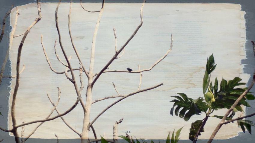 Vintage Tree Branch Bare Tree Beauty In Nature Bird No People St.Croix, US Virgin Islands