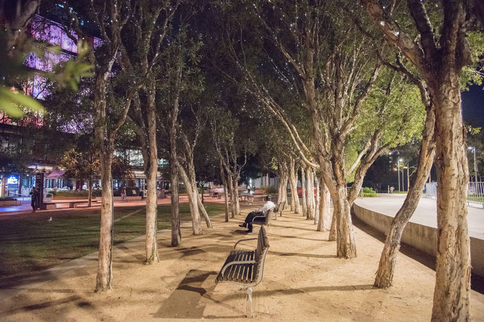 SYDNEY,NSW,AUSTRALIA-NOVEMBER 21,2016: Night time with person relaxing under illuminated trees at Darling Quarter in Sydney, Australia. Australia Bench City Break Harbor Light Night Lights Sitting Tranquility Darling Day Diminishing Perspective Illuminated Leisure Luminous Night Outdoors Park Park - Man Made Space Peaceful Quarter  Relax Resting Sydney Tree Tumbalong