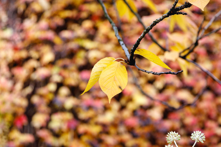 Autumn in London Plant Flower Flowering Plant Beauty In Nature Close-up Vulnerability  Fragility Growth Focus On Foreground Yellow Autumn Freshness Nature No People Leaf Day Plant Part Petal Tree Outdoors Change Flower Head Natural Condition Leaves London
