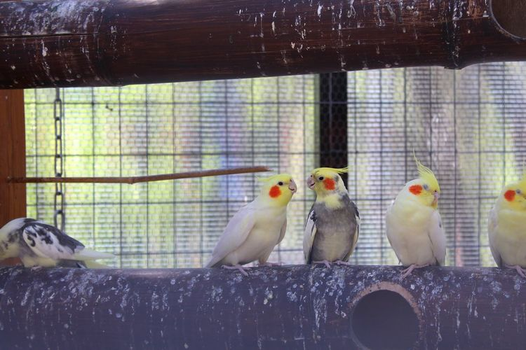 Close-up of birds perching in cage at zoo