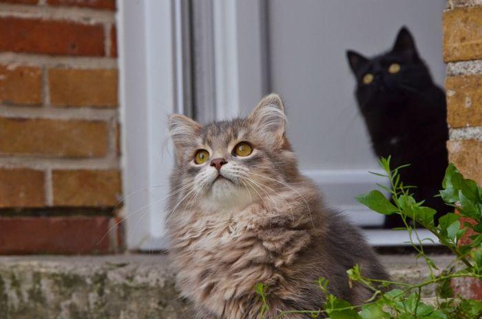 Black Cat EyeEm Nature Lover Catoftheday Cat Lovers Siberian Kitty