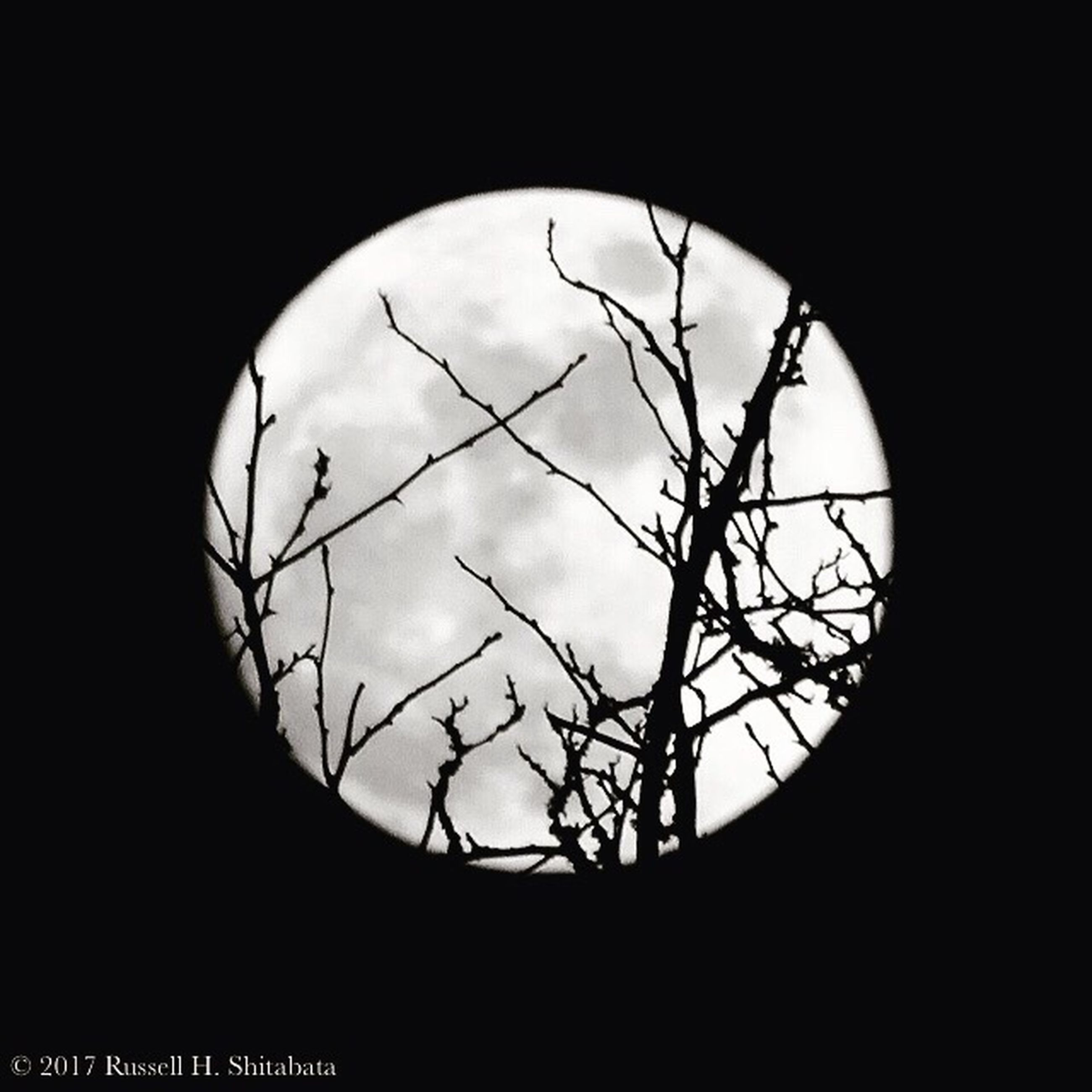 silhouette, no people, sky, low angle view, bare tree, cloud - sky, tree, moon, outdoors, day, close-up, nature
