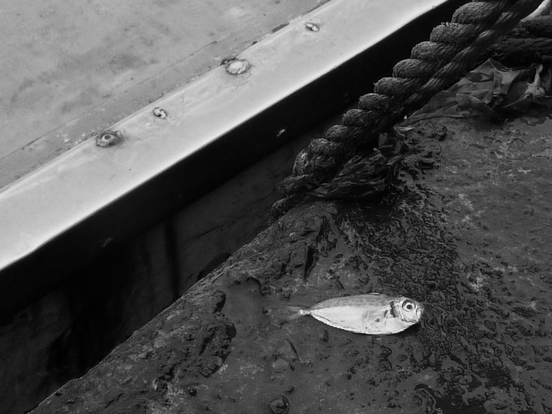 死亡之眼 / Line of Death Getting Inspired Bw_collection EyeEm Best Shots Shootermag Untold Story RePicture Growth Eyeemphotography Streetphoto EyeEm Gallery Black&white Eye4black&white  Bnwphotography Streetview Streetphoto_bw My Black & White Photography Fish