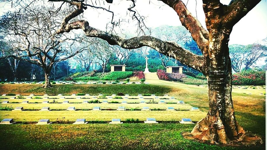 War Memorial War Cemetery Comilla, Bangladesh Tree Graveyard Grass Growth Beauty In Nature Branch Architecture No People Bare Tree Sky Nature Outdoors Day Tree Graveyard Beauty Flower Grave Graveyard Collection