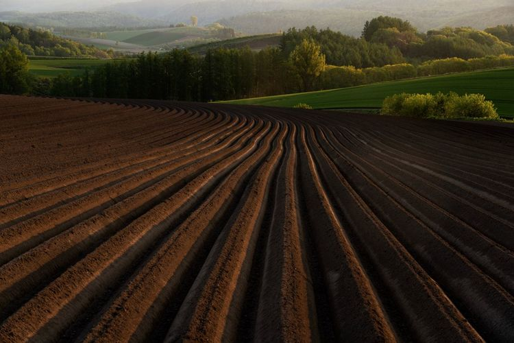 Landscape Agriculture Land Environment Plant Farm Field Pattern Nature Beauty In Nature Tranquil Scene Rural Scene