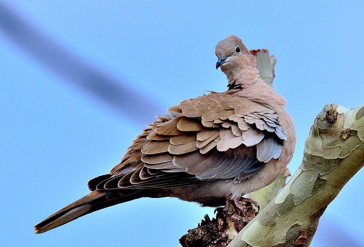 Tòrtora #animal_happy #animals_gr #bestanimalshots #total_fauna #fowl_waterfowl #fauna_police #all_animals_addiction #asi_es_fauna #ok_animals #igw_animals #wow_animal #eye_spy_birds #bestbirdshot #global4nature #birds_adored #thehub_zoo #cub_animals #bird_brilla Sky Low Angle View Nature Day No People Tree Clear Sky