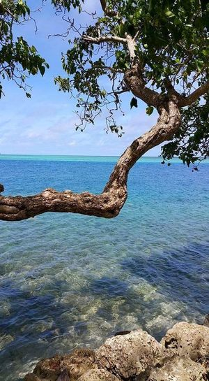 Tree By The Sea Beautidul Day Relax