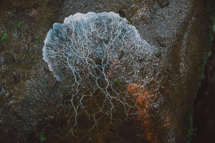Close-up of lichen on wet rock