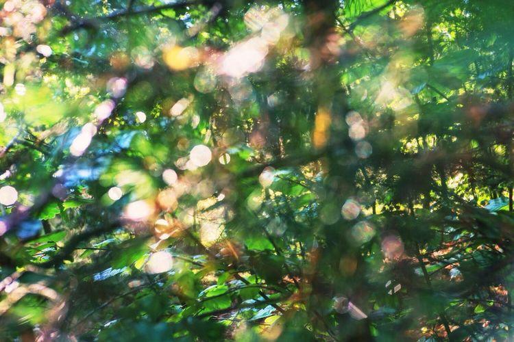 Plants Inverted Focus