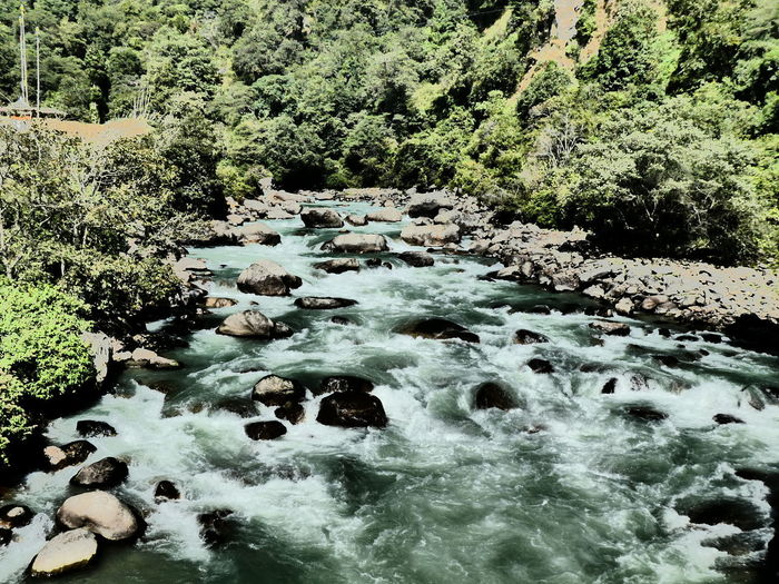 Scenic view of river flowing through rocks in forest