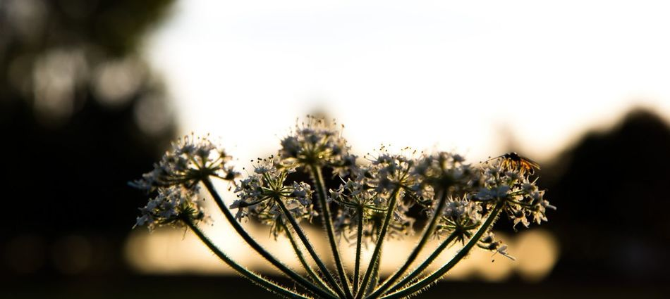 Insekt auf Blume Nature Sunlight Plant Close-up Beauty In Nature Flower No People Outdoors Flower Head The Great Outdoors - 2017 EyeEm Awards