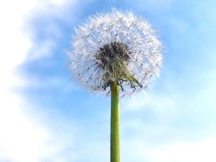 Wish White Whitness Cloud Sky Cloud - Sky Flower Park Bulgaria Bulgarian Nature EyeEmNewHere