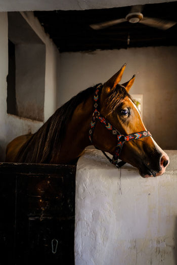 Close-up of a horse in stable