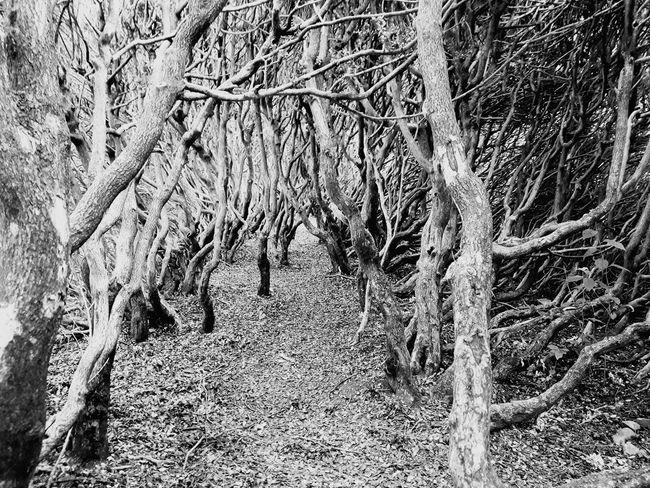 Hidden Path Nature