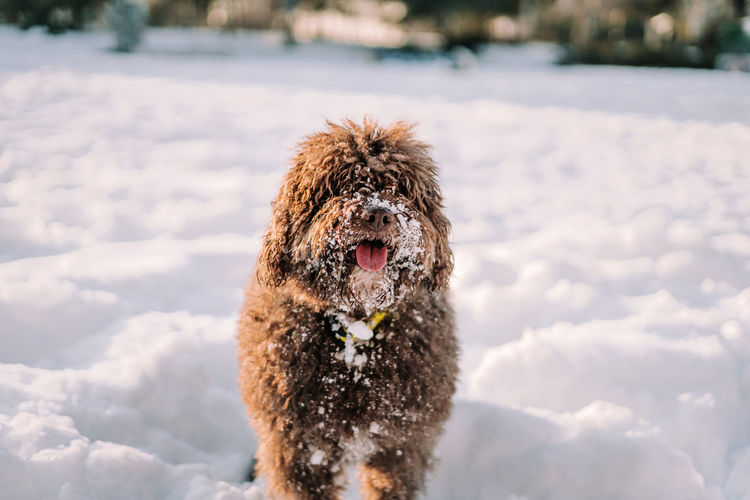 Dog in snow on field during winter