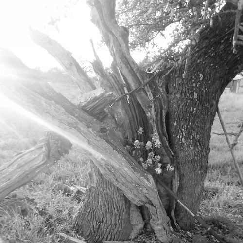 Tree Porn Outdoor Photography Nature Photography Texas Hill Country Black And White Photography