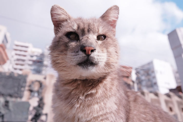 Creepy grey one-eyed cat looking at the camera sitting on a stone slab in a cemetery