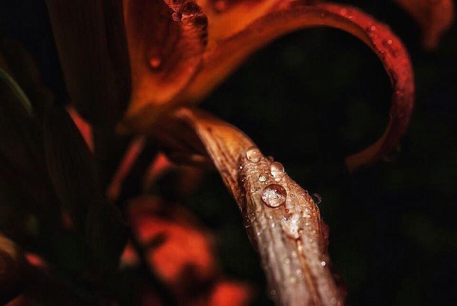 Waterdrops Nature Photograhy Flowers,Plants & Garden Macro Photography Flowers, Nature And Beauty Macro Nature Macro Beauty