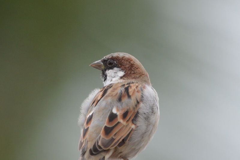 Sparrow in the frame