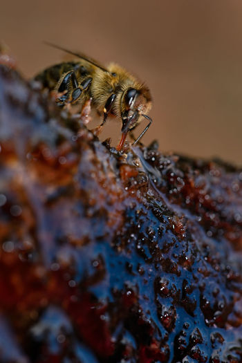 bee APIculture
