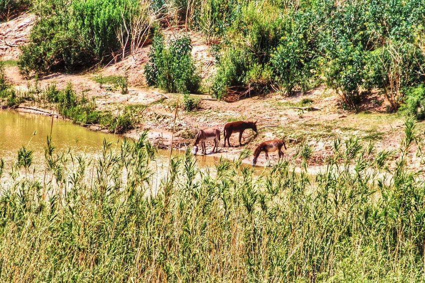U.S.-Mexico border Bridgesnotwalls Landscape Landscape_Collection Landscape_photography Tadaa Community