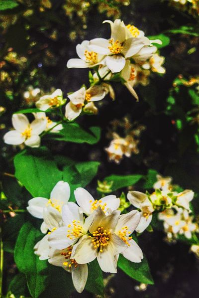Blossom in Multilevels... and Multifocus??? EyeEm Best Shots Respect For The Good Taste Let's Do It Chic! Flowers,Plants & Garden BigBiggerBiggest Fresh Scent