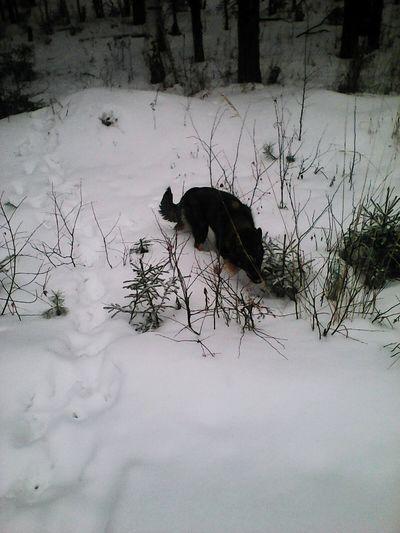 охота зима❄️ собака отдых Хорошеенастроение Хорошийдень Природа