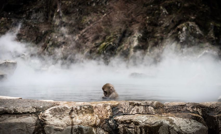 Rock - Object Nature Rock Formation One Animal Geology Beauty In Nature Animal Themes Hot Spring Mammal Water Day No People Outdoors Waterfall Geyser baby snow monkey! Kawaiiii!!