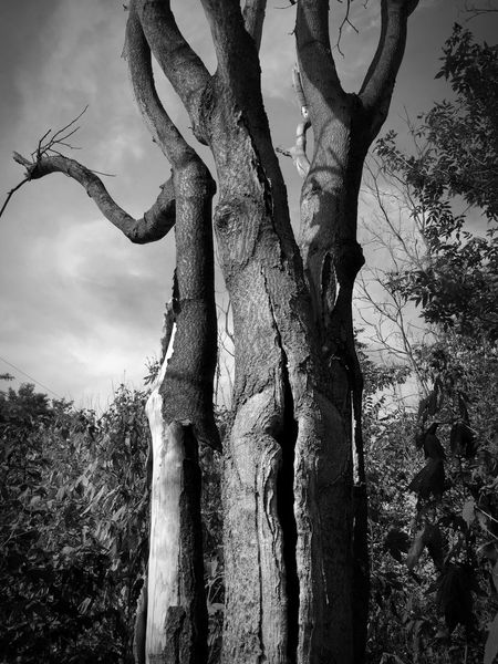 Trees Nature Taking Photos Clouds And Sky What an amazingly shaped trunk. It stood out to me enough to stop and capture the moment. B&W was most fitting for this image. Enjoy.