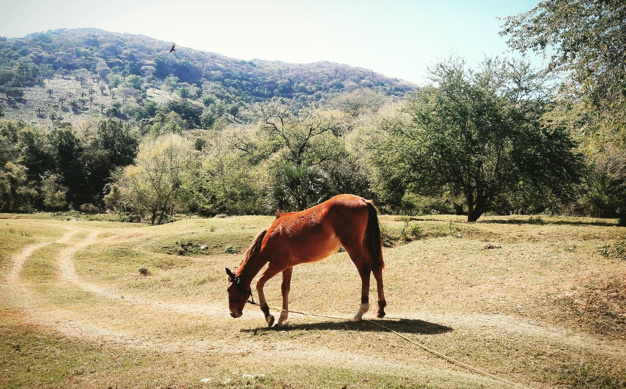 Brown Horse On Field During Sunny Day