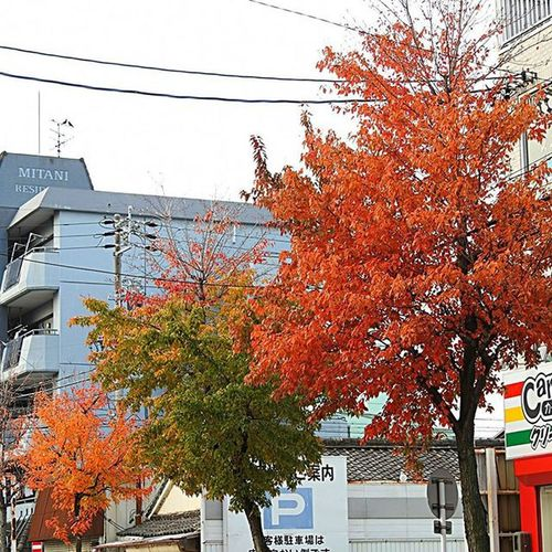 * 我が家の周りもようやく紅葉🍁 でもまだ緑もありますよ🎵 Around the home also finally autumn leaves 🍁 But still there is also a green 🎵 * 風景 名古屋 眺め Landscape Vista 眺望 View Nagoya スナップ Japan 日本 Love_world Bestnatureshot 綺麗 景色 Nature 自然 爽やか Sky Igworldclub Follow Worldbestgram Aichi Beautiful Lov view_japan_nagoya_yama 🎶